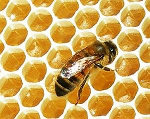 вкусный мед
